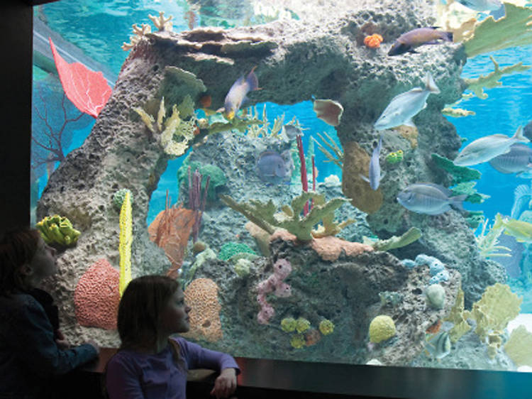 Free museum days for kids in NYC