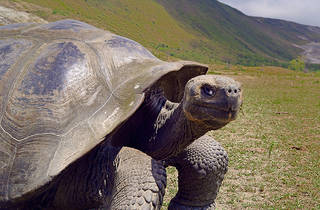 Galapagos: Nature's Wonderland in 3D
