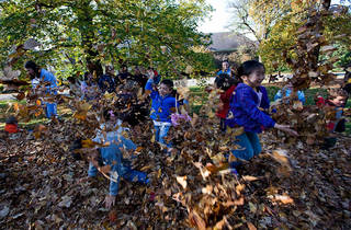 Family Art Project: Dances with Leaves