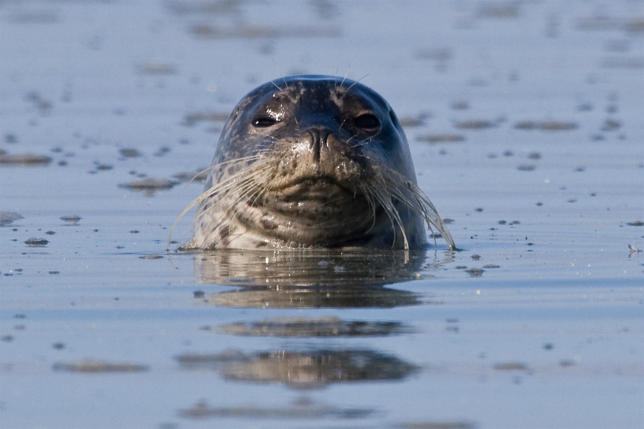 NYC Audubon Winter EcoCruise: Seals and Wildlife of NY Harbor