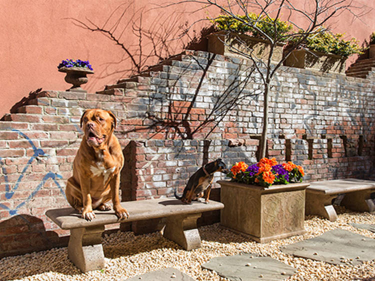 Pet-friendly hotels in New York
