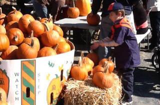 Pumpkin Carving at Field Station: Dinosaurs