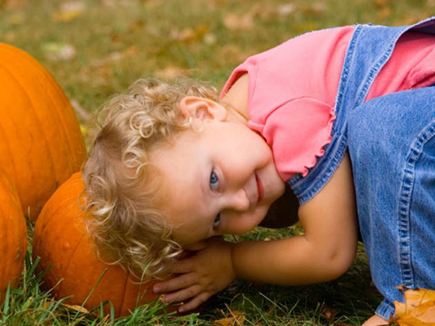 Where to go pumpkin picking near NYC