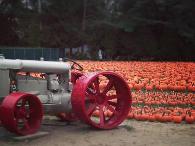 Albert H. Schmitt Family Farms