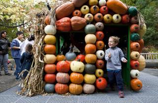 The Haunted Pumpkin Garden