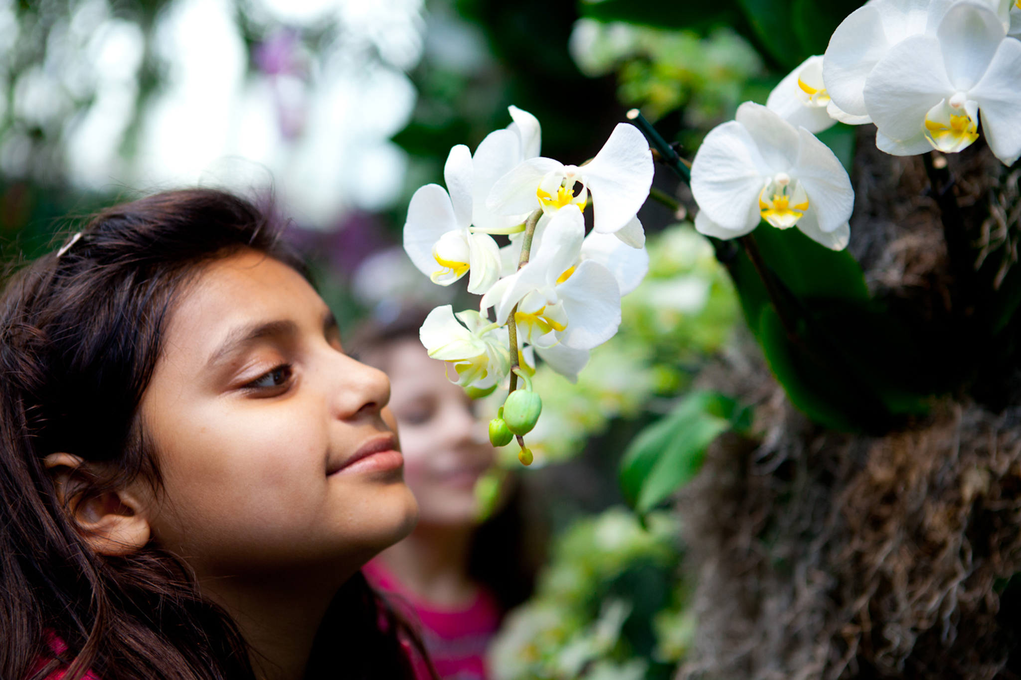 Stop and smell the flowers at NYBG's Orchid Show