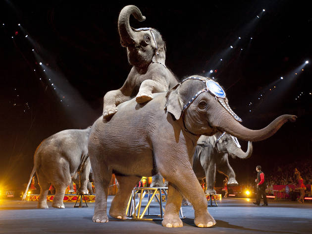 See Ringling Bros. and Barnum & Bailey presents Legends