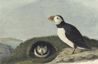 """Audubon's Aviary: Part II of the Complete Flock"""