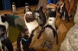 12-days-penguins.jpg