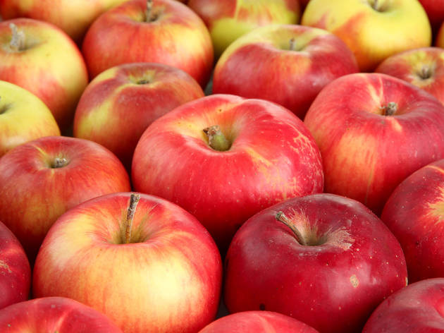 Best apple picking farms and orchards