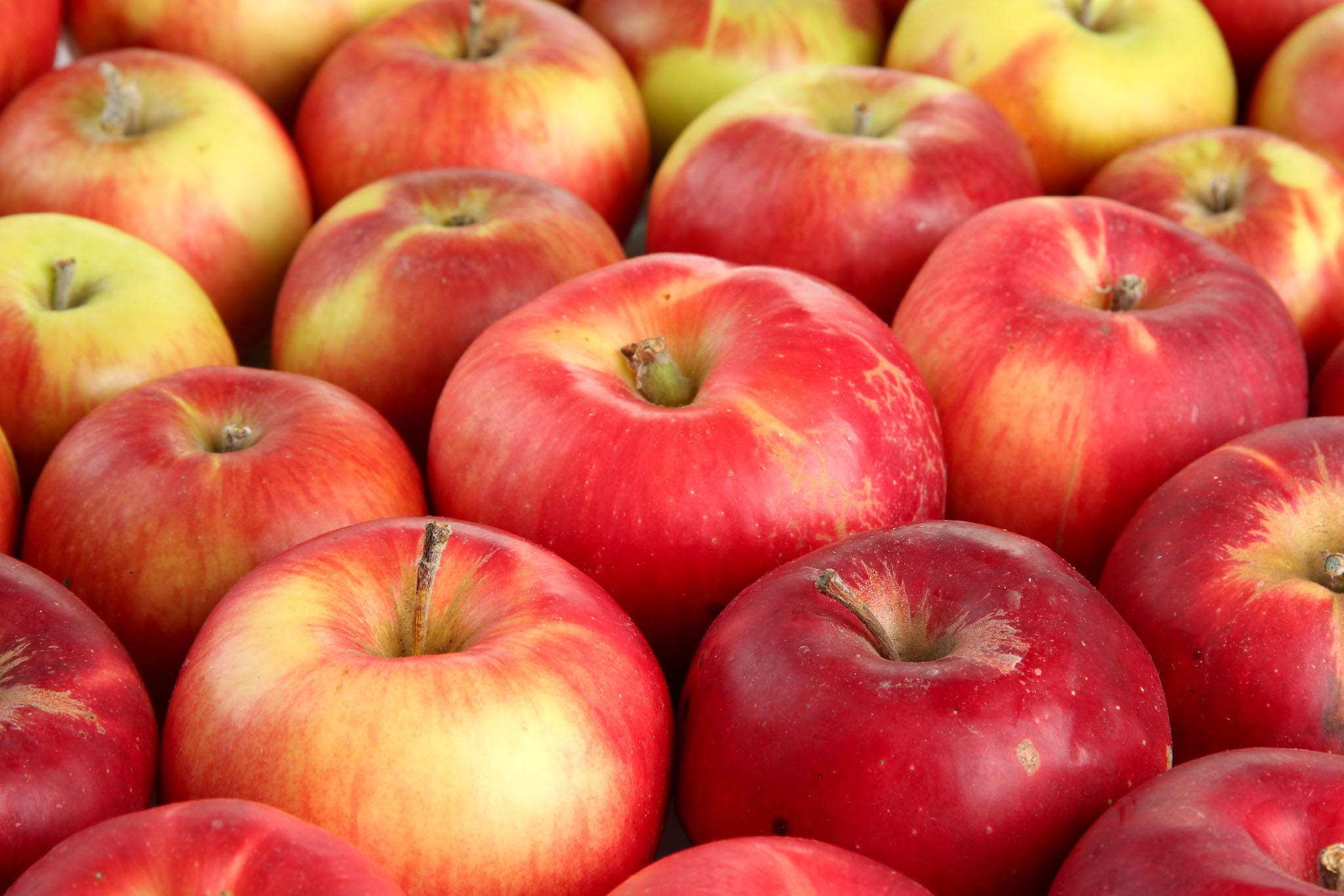 The best apple picking near nyc for kids and families for Where can i go apple picking near me
