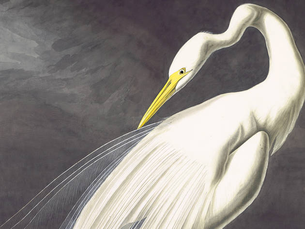 """Audubon's Aviary: Part I of The Complete Flock"""