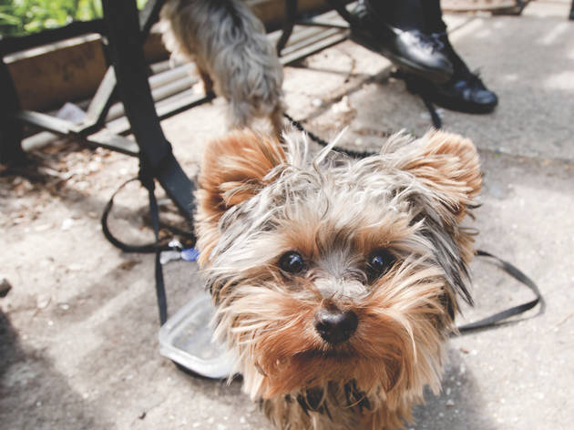 Dog-friendly NYC parks