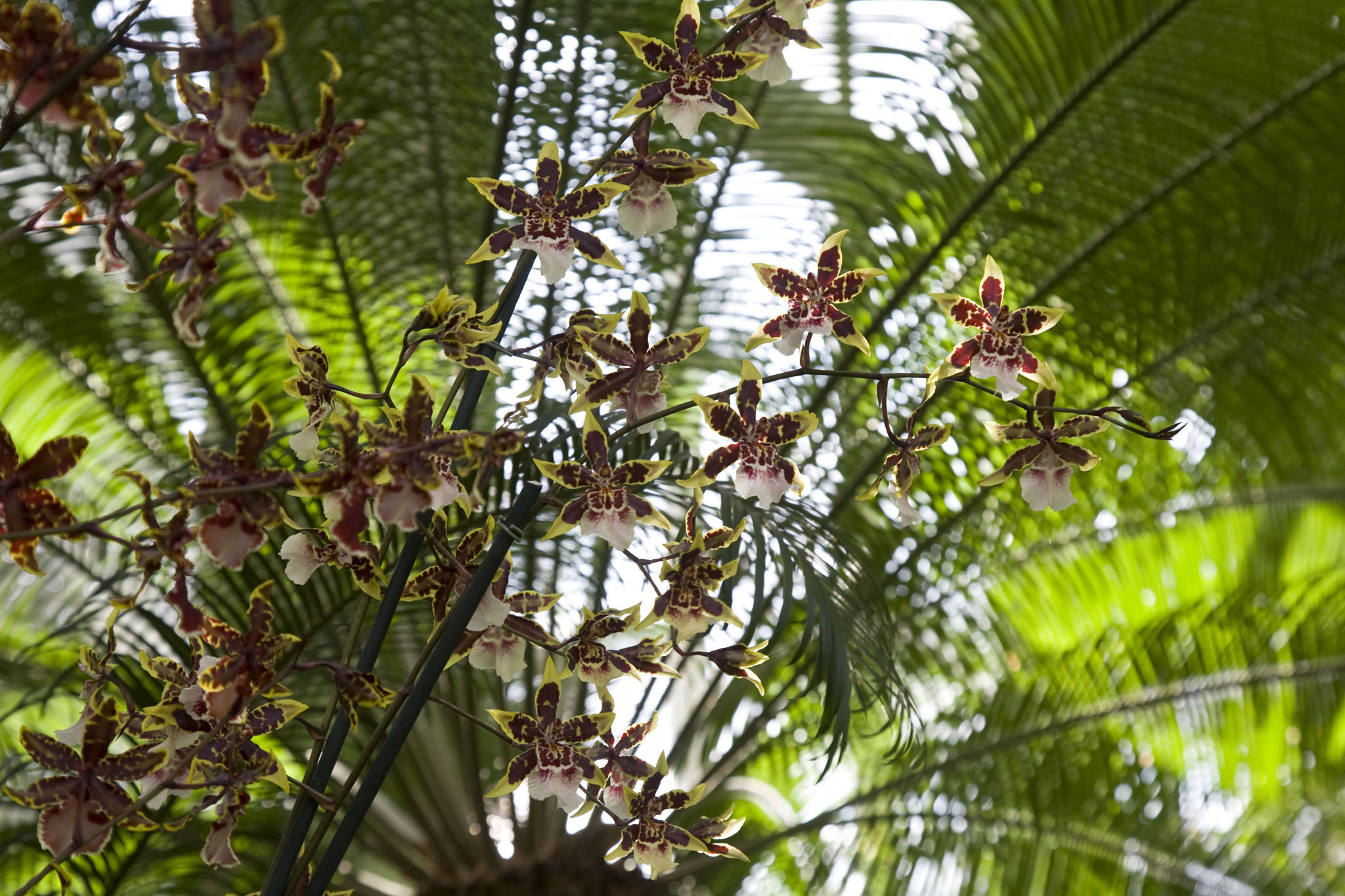 Look at thousands of blooms at the Orchid Show
