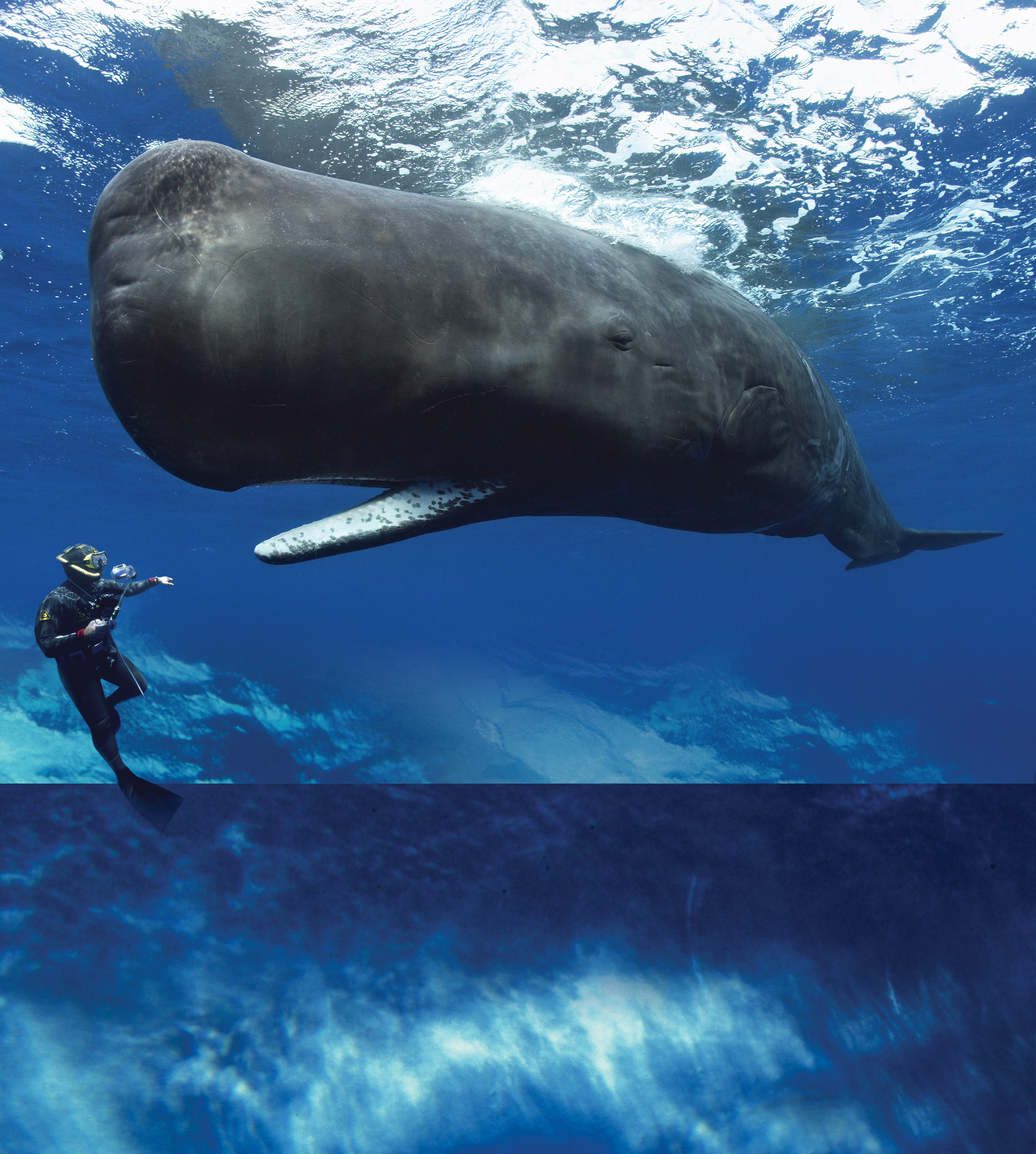 """""""Whales: Giants of the Deep"""""""