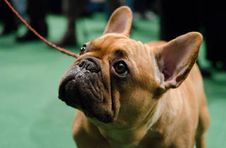 The Westminster Kennel Club 139th Annual Dog Show