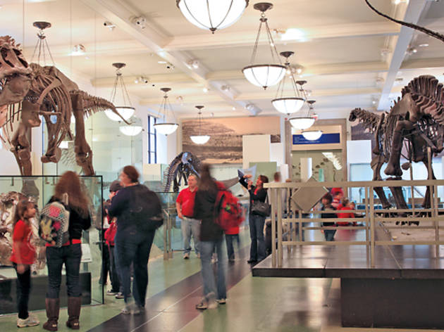 Best NYC museum for kids to visit: American Museum of Natural History