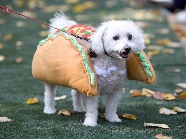 The Annual Tompkins Square Halloween Dog Parade