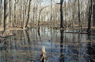 wolfe's-pond-park,-swamp-no.jpg