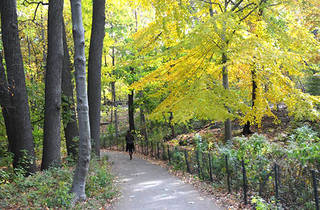 (Photograph: The Central Park Conservancy)