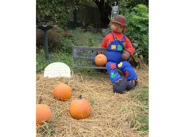 Harvest Festival and Pumpkin Patch