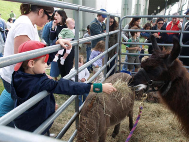 West Side County Fair petting zoo