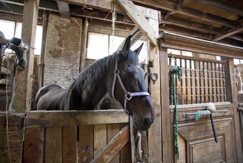 Go horseback riding at Kensington Stables