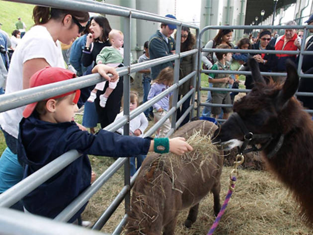 Fall festivals and fairs for NYC families