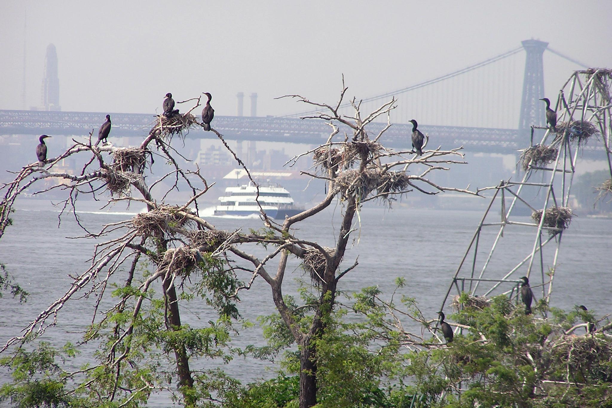 Meet your avian neighbors with NYC Audubon