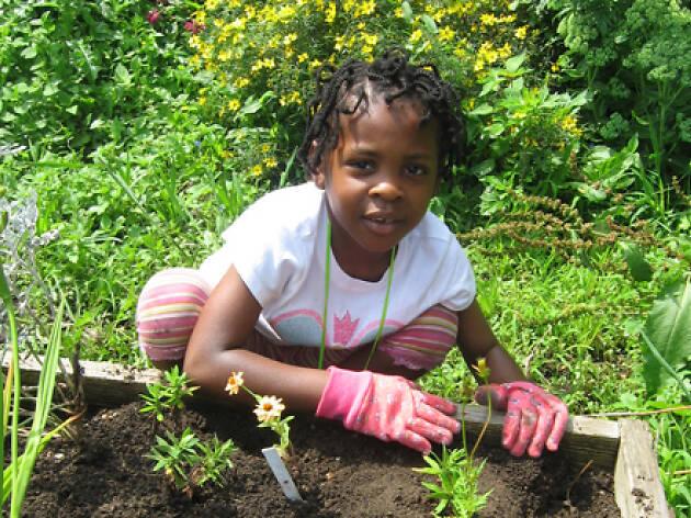 Children's Garden at the Queens Botanical Garden