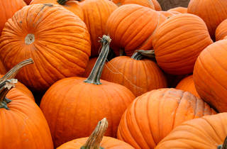Permaculture Festival & The Great Pumpkin Smash