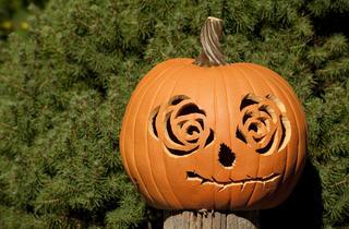 Giant Pumpkin Carving Weekend