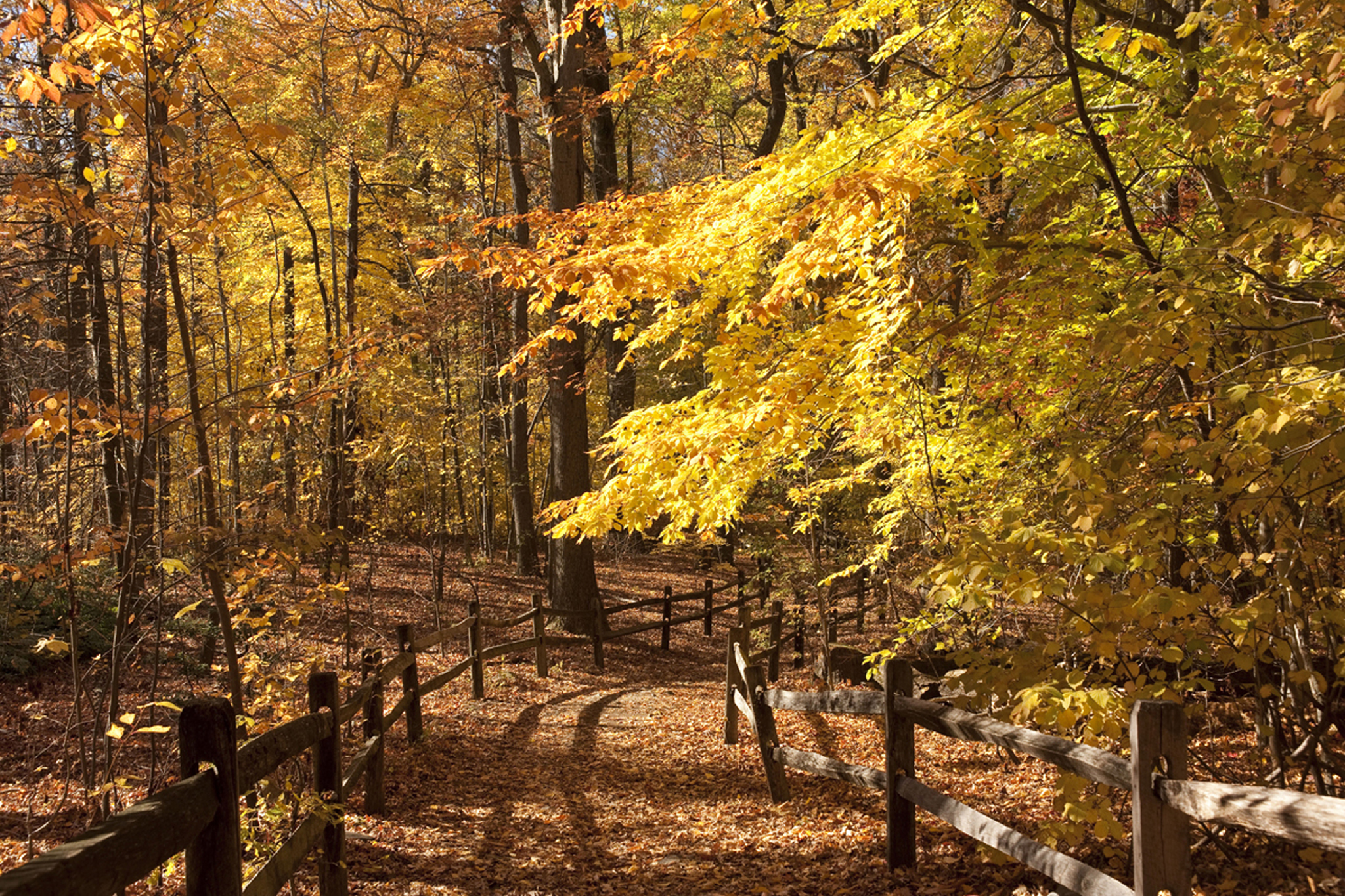 Fall Forest Weekend | New York Botanical Garden | Bronx, NY | Things ...