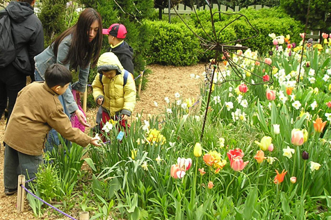 Free Admission at Brooklyn Botanic Garden