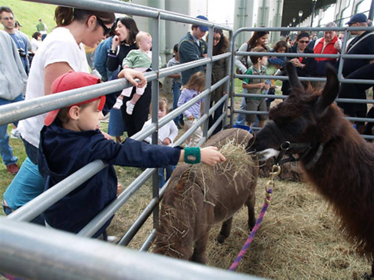 Explore the West Side County Fair