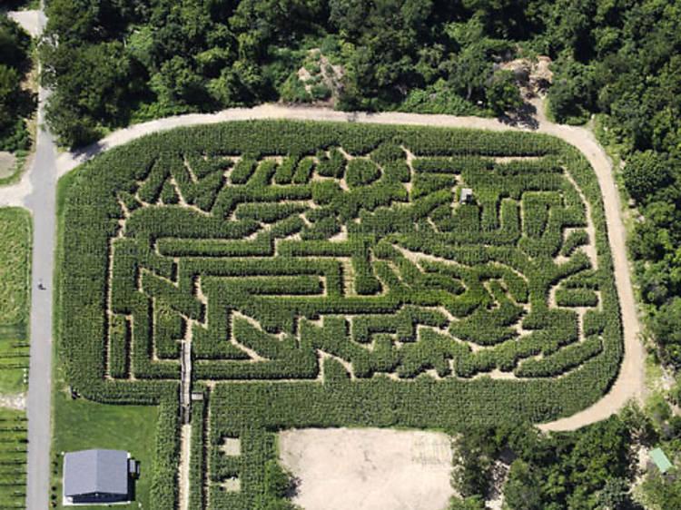 Take a stroll through the Amazing Maize Maze