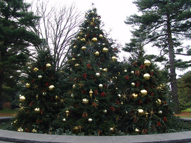 NYBG Holiday Tree Lighting