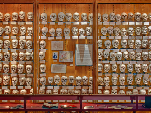 Ogle medical oddities at the Mütter Museum