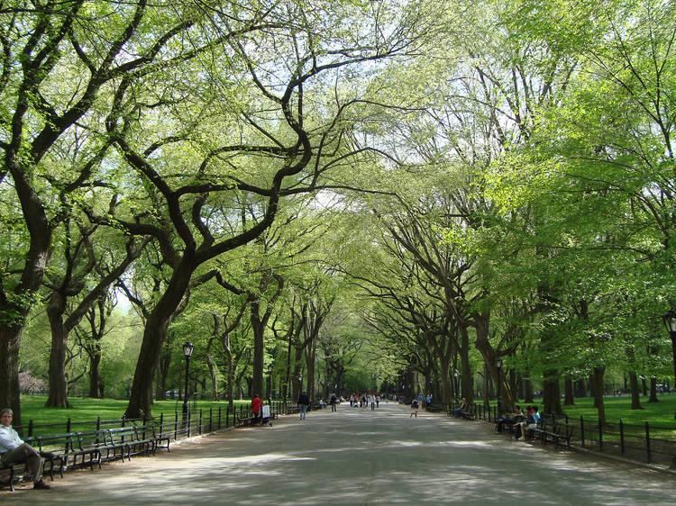 Central Park   Manhattan, NY