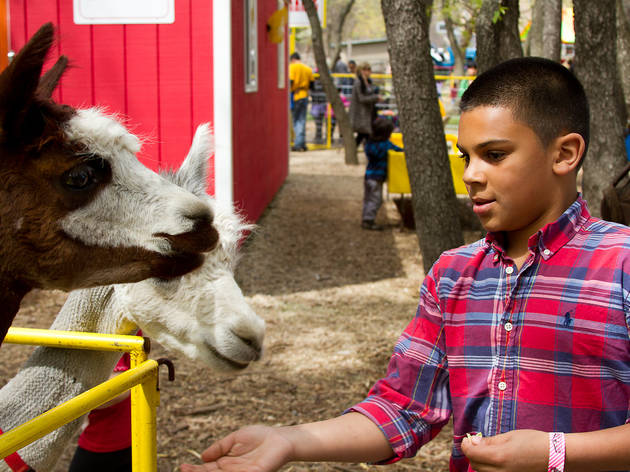 Meet the animals at the Queens County Farm Museum