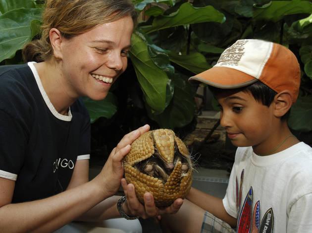 Bronx Zoo's Animal Kingdom Camp