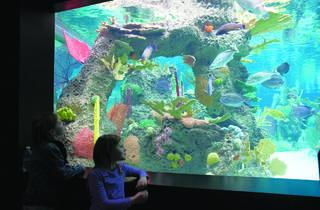 World Oceans Weekend Celebration
