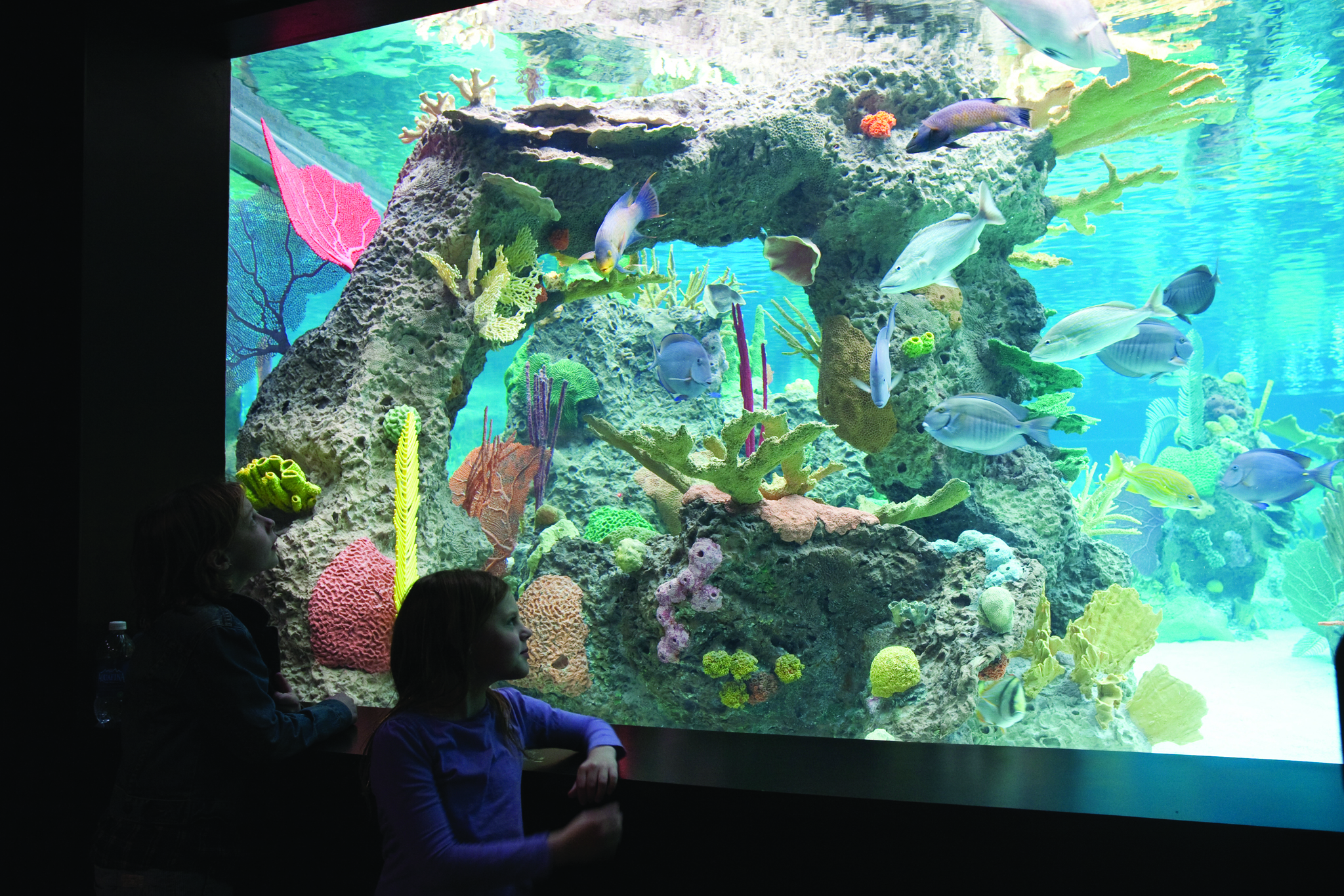 Best free museum days for kids and families in nyc Aquarium free days