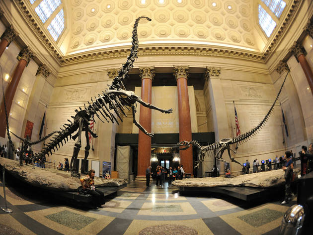 "American Museum of Natural History ""Dinosaurs"""