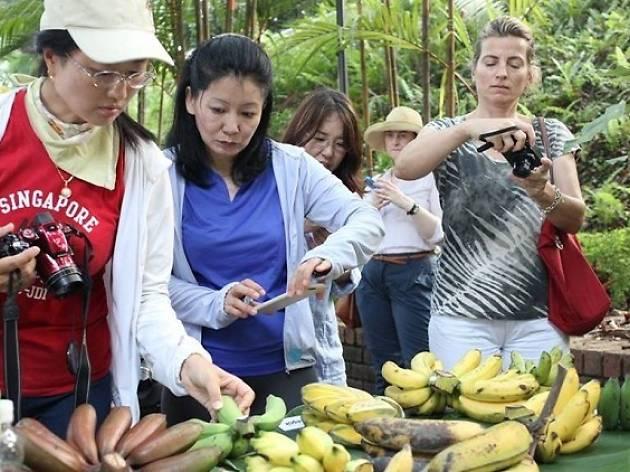 Going Bananas! Workshop