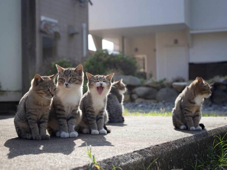 10. Meet the cats of Ainoshima Island