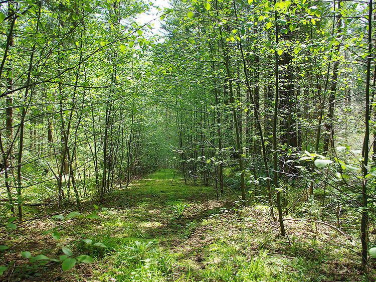 Oregon: Photograph the trees on Tillamook Head Trail