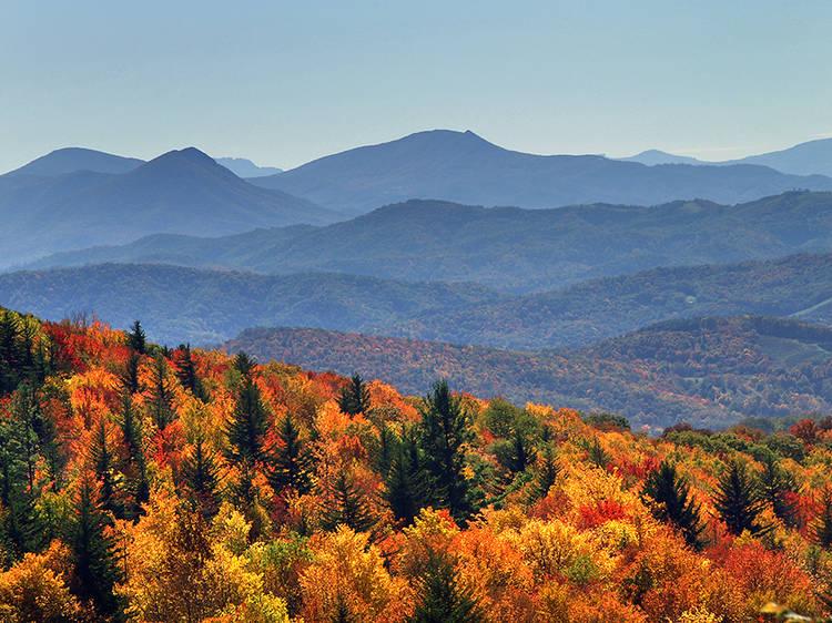 Virginia: Climb Mount Rogers