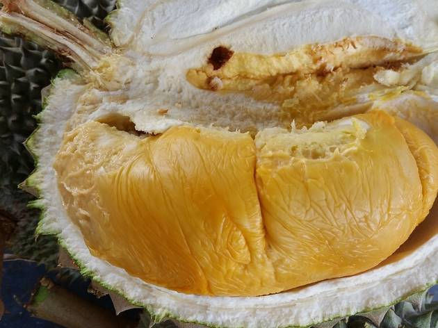 Black thorn Durian King