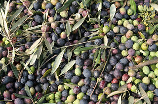 olive oil, Olives, food and drink, restaurants, croatia, time out croatia
